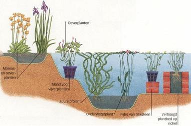 Ontwerp van een vijver vijvers voor elke tuin for Tuinvijvers aanleggen