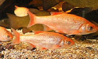 Vissen In Vijver : Vissen in de vijver goudvissen koikarpers sarara goudwinde