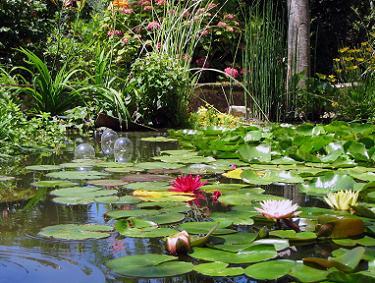 Ontwerp van een vijver vijvers voor elke tuin for Vijvers foto s