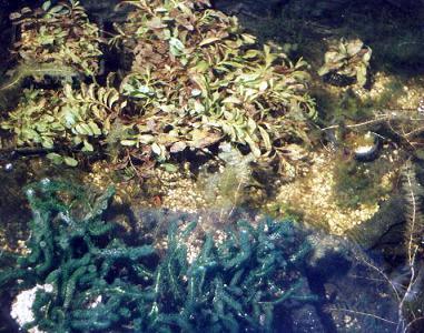 Helder vijverwater in plaats van groen en troebel water in de vijver